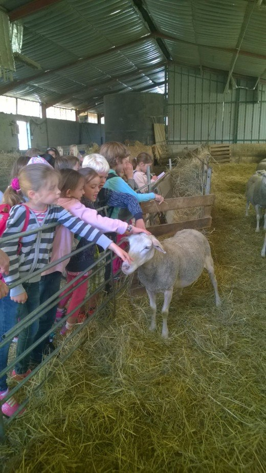 We have been learning about a farmer's job and farm animals.